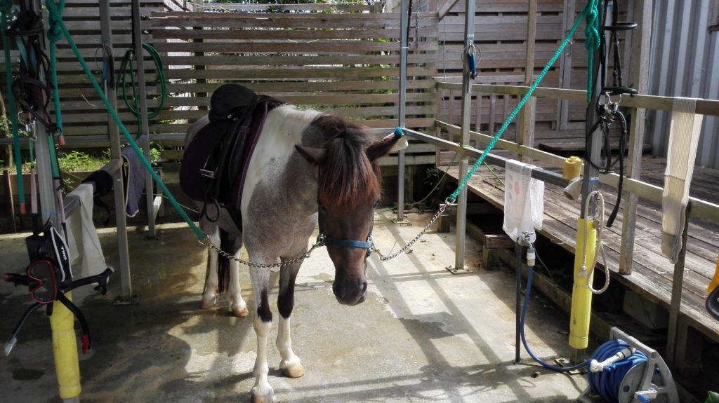 アリビラのオプショナルツアー 乗馬体験