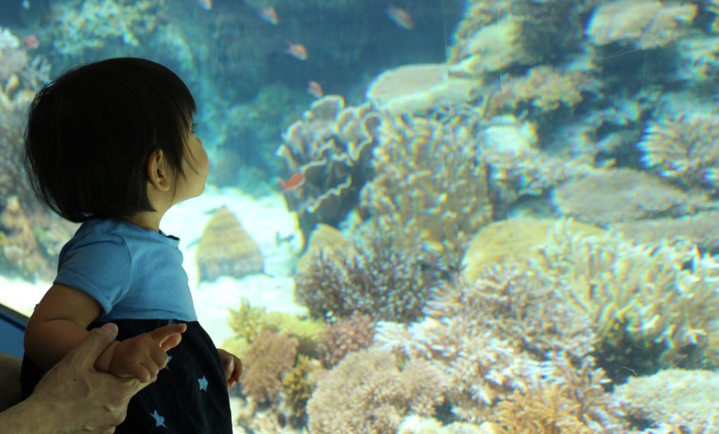カヌチャリゾートから50分 美ら海水族館