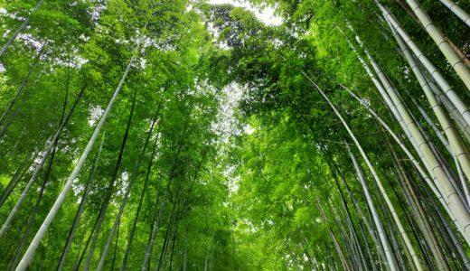 【嵐山編】そうだ、子連れで京都いこう。世界遺産でランチ&竹林お散歩プラン