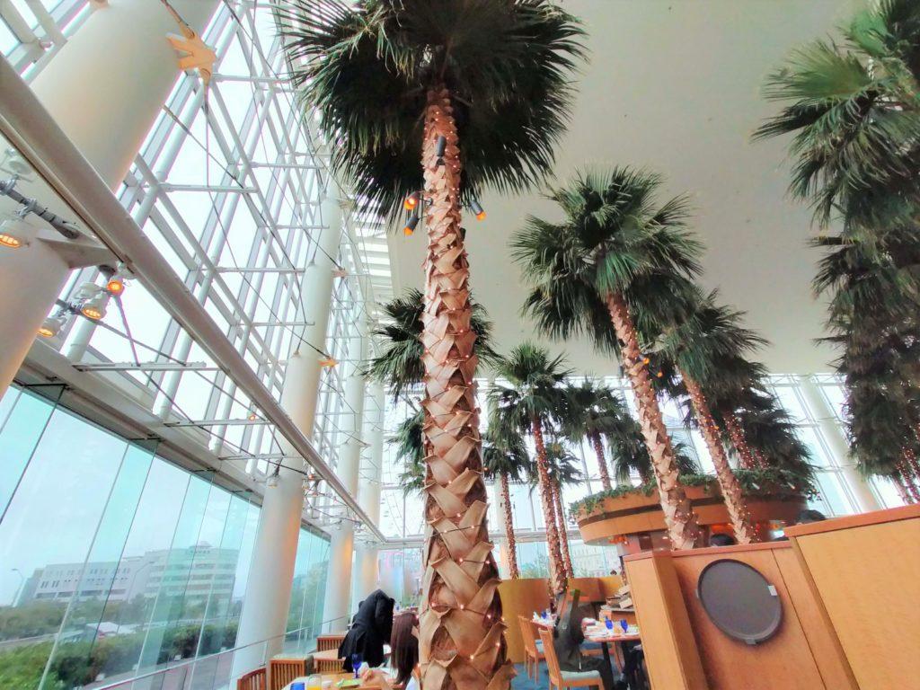横浜ベイホテル東急の「カフェ・トスカ」のヤシの木
