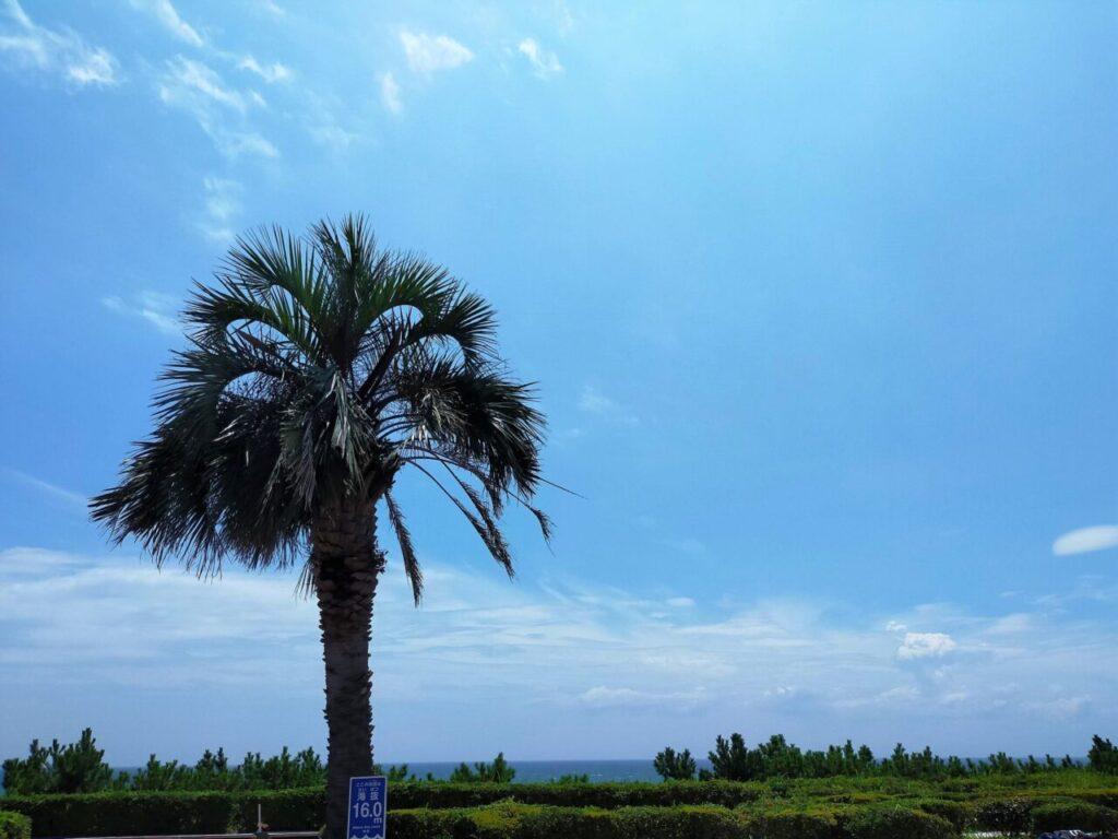 大磯ロングビーチから見える海の様子